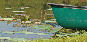 Green-Boat-at-Lake